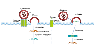 Anti-infection Related Signaling Pathway