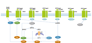 GPCR/G Protein Related Signaling Pathway