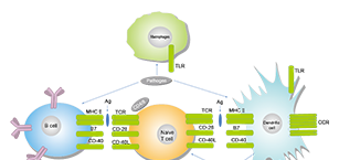Immunology/Inflammation Related Signaling Pathway