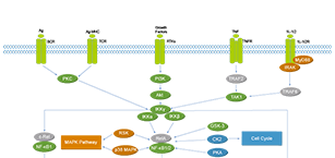 NF-κB Related Signaling Pathway